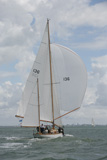 Sanders classic sails, Laughing Gull